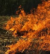 First forest fires of this year recorded in Latvia