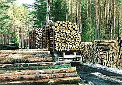 Latvian exports of forest products top EUR 1.5 bln in 9 months