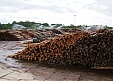 Vika Wood Latvian sawmill saw increase in turnover and profits in 2014