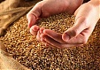 Latvian grain farmers expect EUR 220 mln losses in 2014