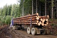 Forest industry exports continue to show moderate growth in Latvia