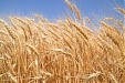 Lithuania wants to export grain to China