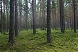 Sweden's Ikea owns 38,000 hectares of forest in Baltic states