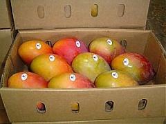Lithuania prohibits distribution of Brazilian mangoes