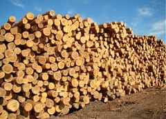 The prices for sawlogs, pulpwood, wood chips, pellets and lumber decreased in Q2