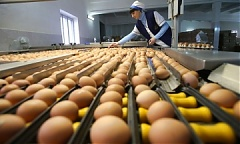 US egg imports permit would make Lithuania 3rd sanctioned country worldwide