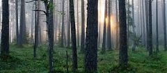 Estonia joins declaration of climate friendly forest management