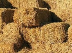 Lithuania's Auga Group, My Land LT eye haylage exports to China