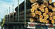Latvian forest industry's export increased by 11.3% in 9 months
