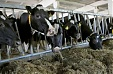 Estonian Rural Affairs Minister asks for EU emergency assistance to dairy farmers