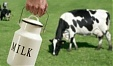 Latvia's dairy produce at 99.14% of milk quota; Estonia will pay a fine