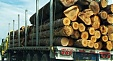 Latvian forestry industry exports keep growing in January-November 2015