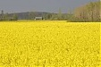 Foreigners own about 15% of Latvian agricultural land - farming association
