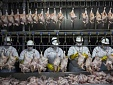 Lithuanian producers may benefit from Brazil's meat scandal