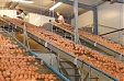 Balticovo plans EUR 3.3 mln investment in expanding production of cage-free eggs