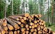 Slight increase in purchase prices of round timber registered in Latvia in H2