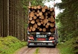 Latvia raises exports of forestry products by 9.5% in 4 months