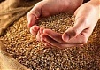 Lower crops, higher price expectations push Lithuania's grain export down