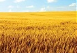 Lithuania may get green light for wheat exports to China