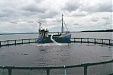 Danish company to start trout farming in Lithuania's Klaipeda