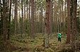 Estonian state forest manager RMK to plant 21 mln trees in 2019