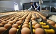 US experts checking Lithuania's egg producer Baltic Egg Production