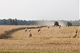 Farmers' demand for loans has significantly increased - Swedbank