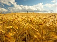 Lithuania's grain exports soar 32% in August y-o-y